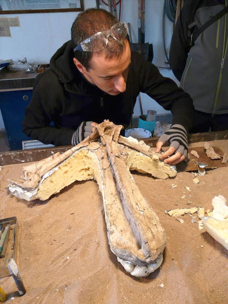 ruben-contreras-paleontologo